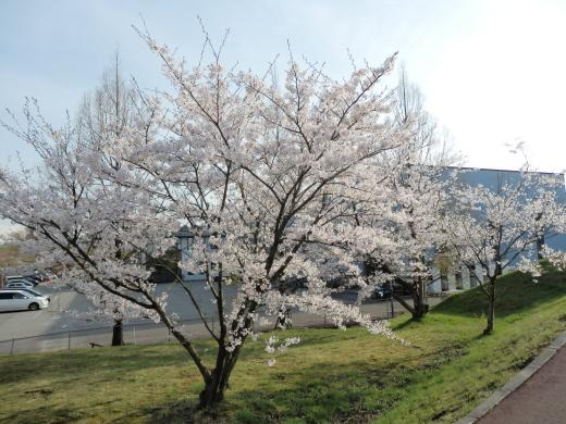 ishikawatsubatatown1604-4.jpg
