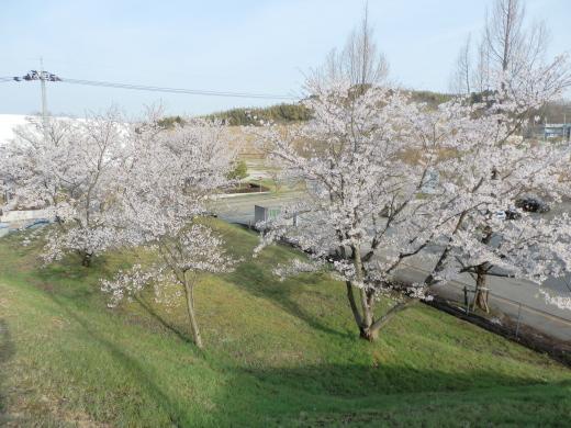 ishikawatsubatatown1604-5.jpg