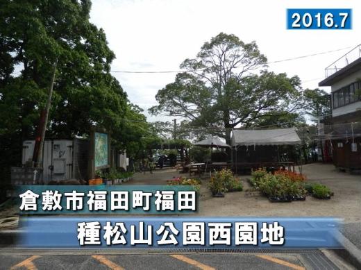 kurashikicitytanematsuyamapark1607-1.jpg