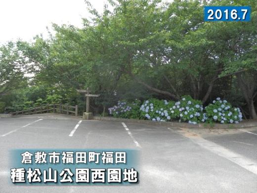 kurashikicitytanematsuyamapark1607-14.jpg