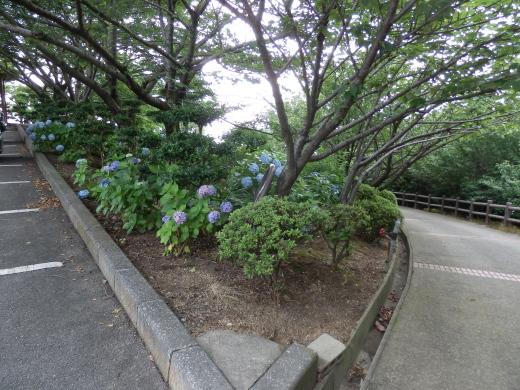 kurashikicitytanematsuyamapark1607-19.jpg