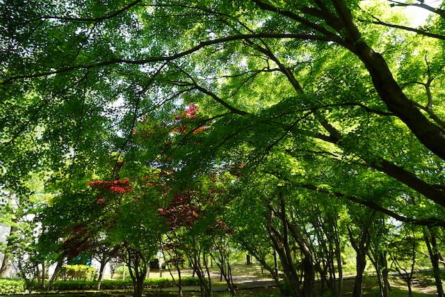 0505植物園3