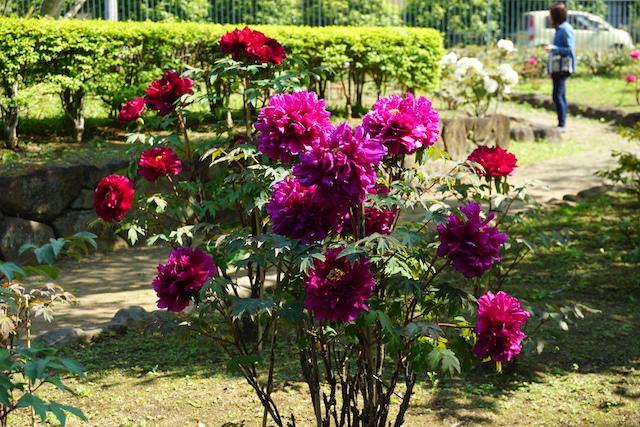 0505植物園5