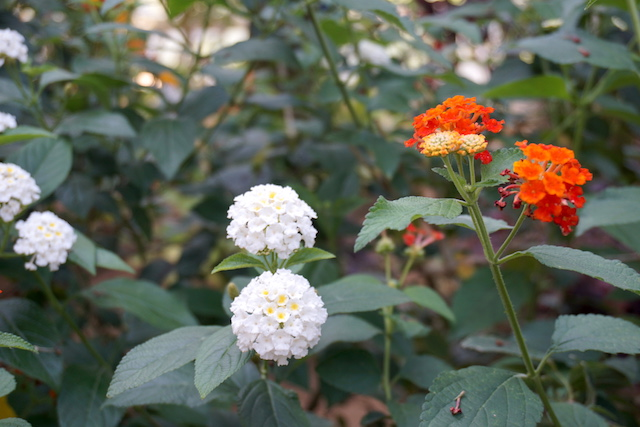 0505植物園8
