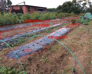 野菜計画地