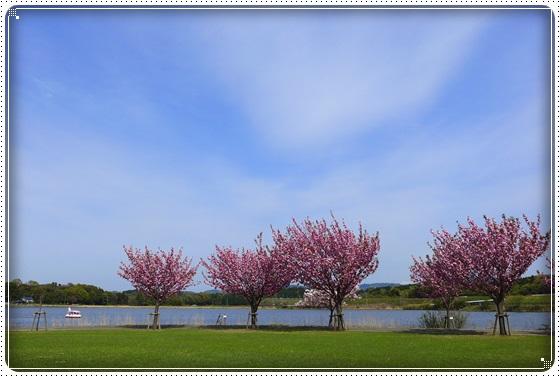 2016,4,21湖畔公園1