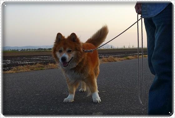 2016,5,2お散歩5