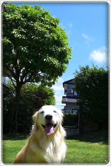 2016,5,12お散歩2