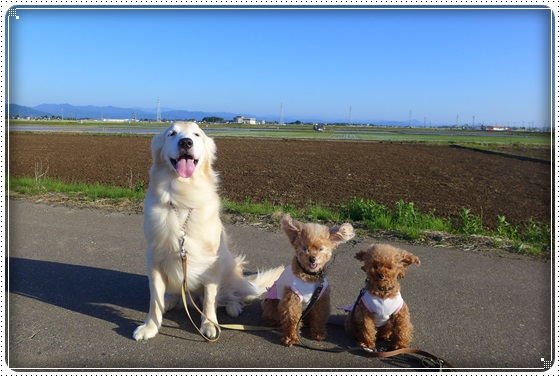 2016,5,12お散歩9