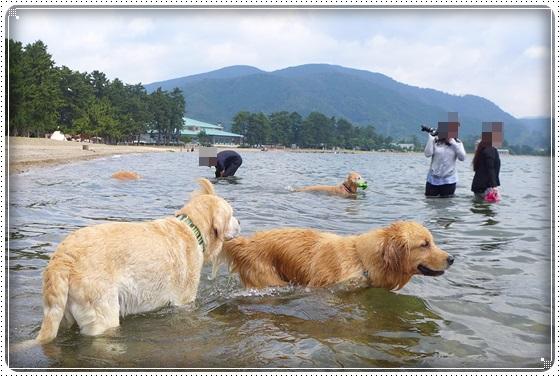 2016,6,27琵琶湖8