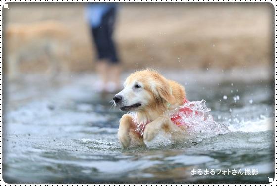 2016,6,29琵琶湖3