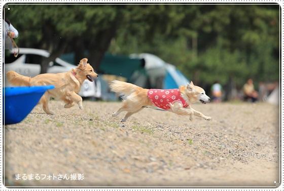 2016,6,29琵琶湖2