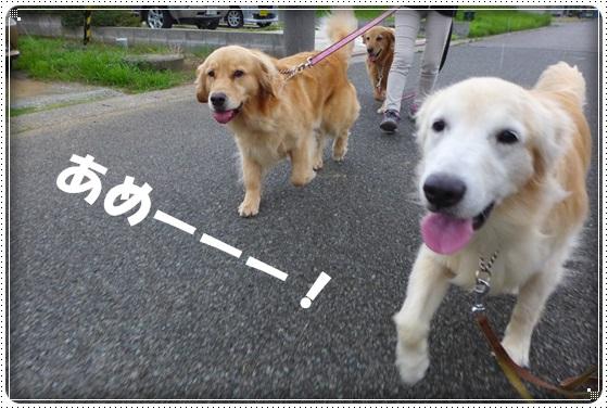 2016,7,8お散歩7