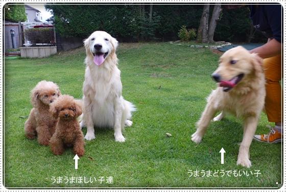2016,8,29お庭遊び16