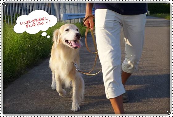 2016,9,25お散歩4