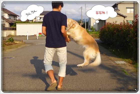 2016,9,25お散歩3