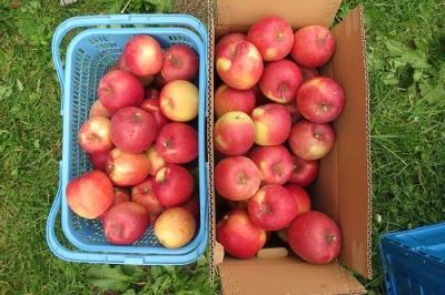 りんごいっぱい!