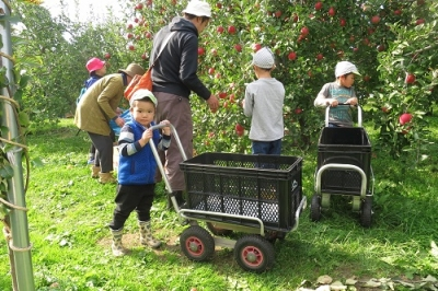 かんリンゴ狩り