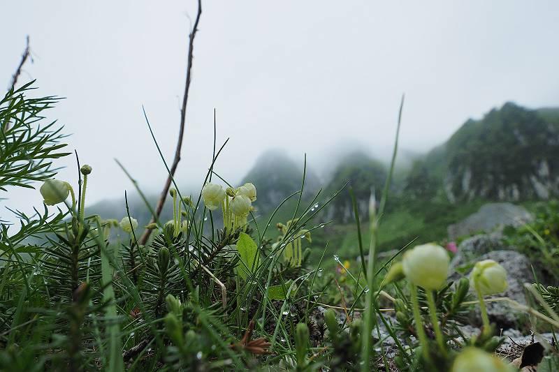aonotugazakura_009-m.jpg