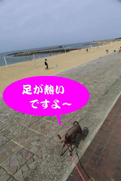 IMG_0295_convert_20160501220808.jpg