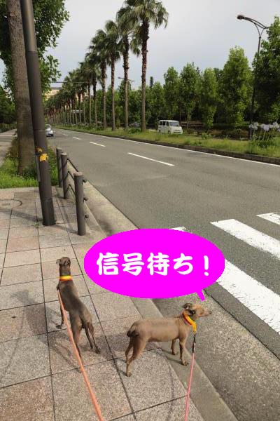 IMG_7346_convert_20160630221518.jpg
