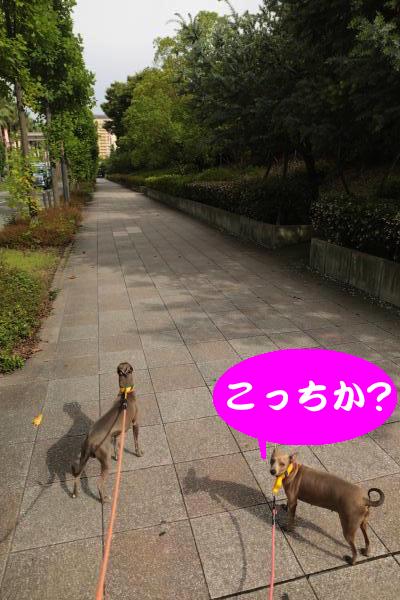IMG_7348_convert_20160630221850.jpg