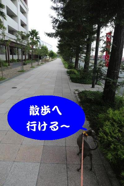 IMG_8678_convert_20160710181103.jpg