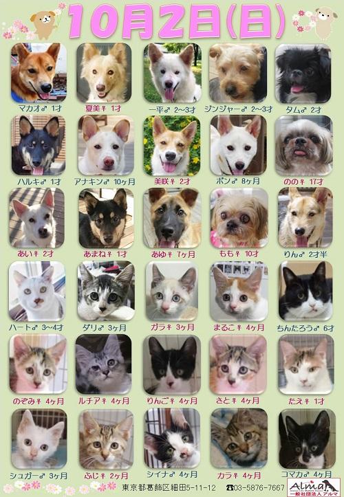 ALMA ティアハイム 10月2日 参加犬猫一覧