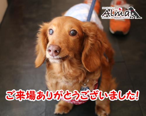 thanks_2016072008303630e.jpg