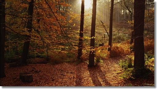 bing秋イギリスの チェシャー州