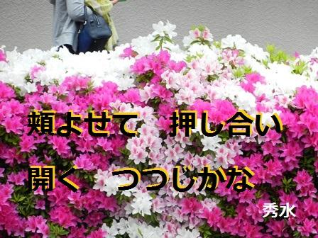 TSUTSUJI01.jpg