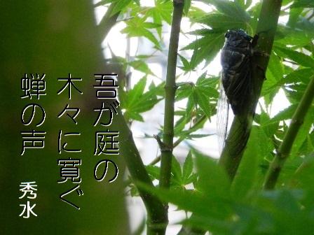 niwazemi01.jpg