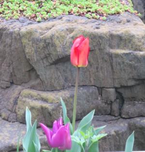 garden flower040216 (16)