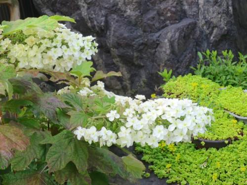 garden flower061216 (5)