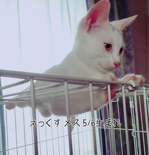 xchan.jpg