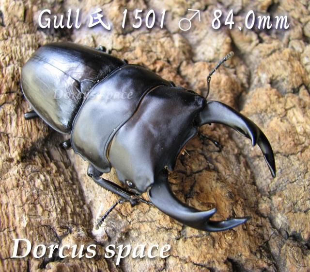 gull1501-84002 (640x560)