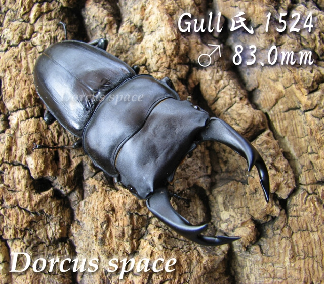 gull1524-83002 (640x561)