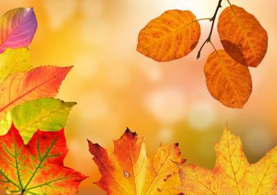 autumn-1649362_1280_convert_20161007072134.jpg