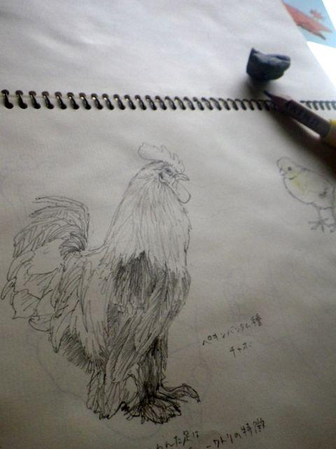 とりたちを・鶏1