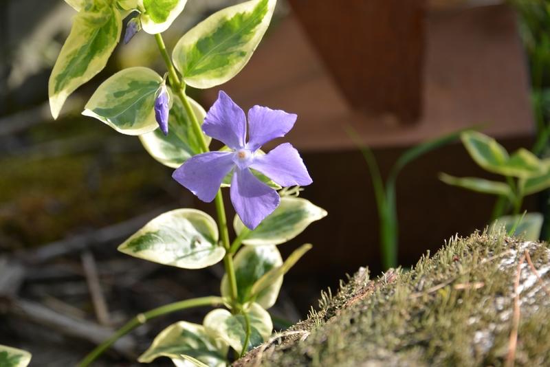 春の花たち-1
