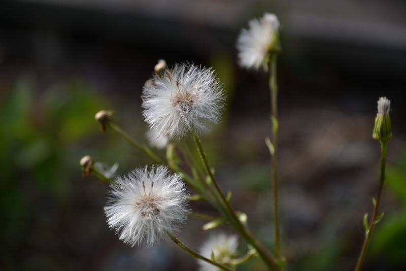 春の花たち-2