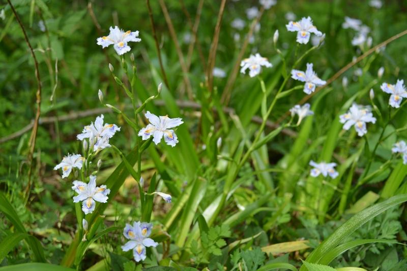 春の花たち-4