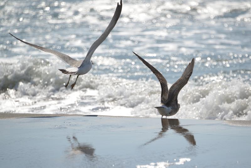 連休の海岸 かもめ-3