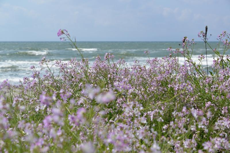 浜に咲く-1