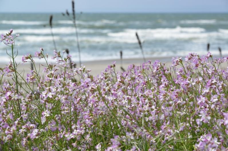 浜に咲く-2