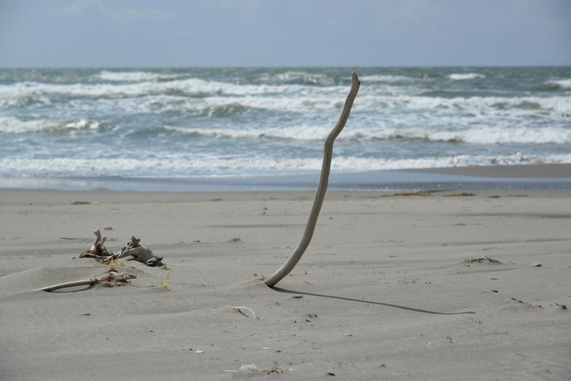 浜に立つ-1