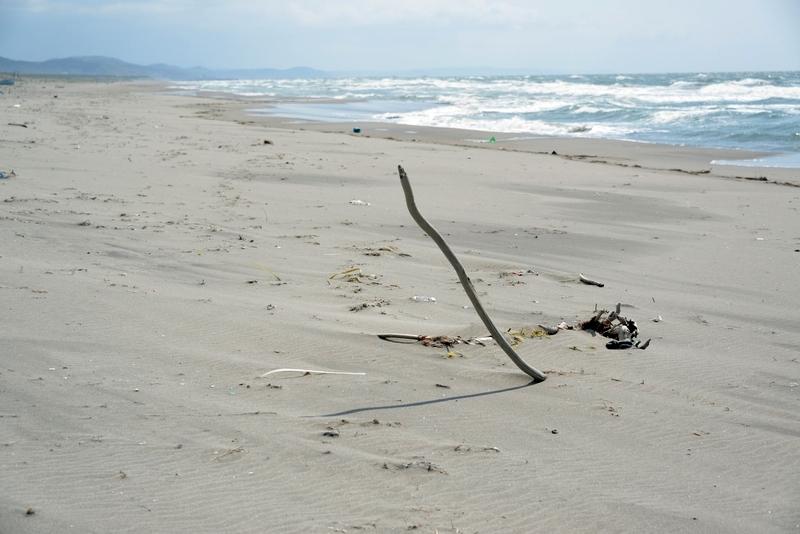 浜に立つ-4