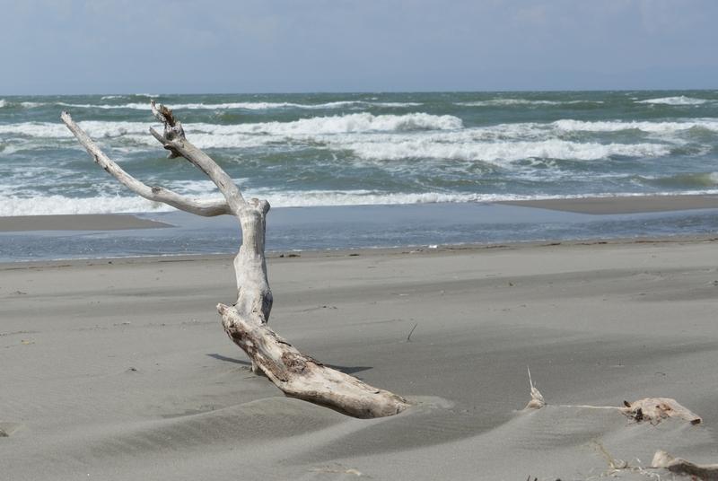 浜に立つ-5