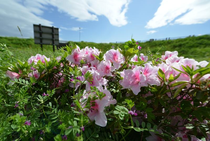春の花 広角にて-1