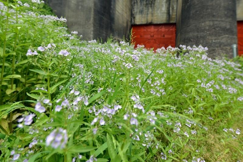 春の花 広角にて-3
